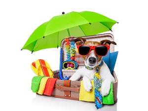 booked your holiday..don't forget to book your dog's holiday too.